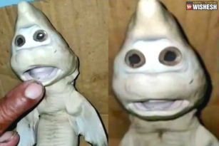 Indonesian Fisherman spots Mutant Baby Shark with a Human Face