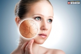 How to get rid of dry skin?, Tips to prevent dry skin, tips to prevent dry skin, Skin care